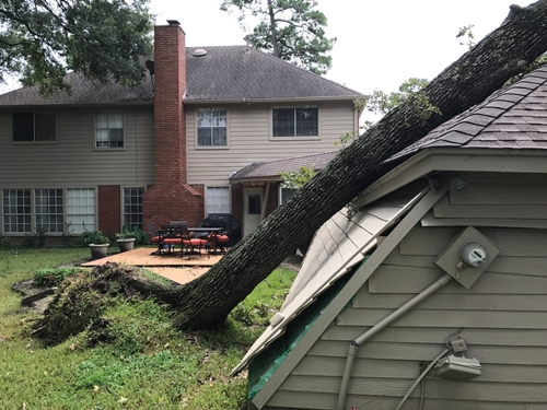 Emergency tree removal tomball tx