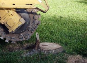 tomball arborist tree stump removal