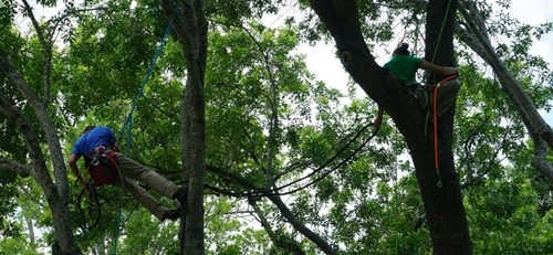 tomball tree cabling service