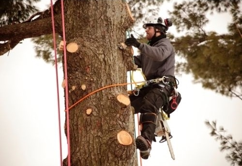 tomball tx tree care