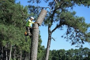 tree removal tomball tx