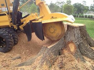tree stump removal tomball tx