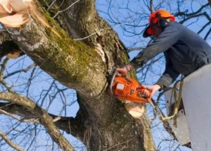 tree trimming tomball tx